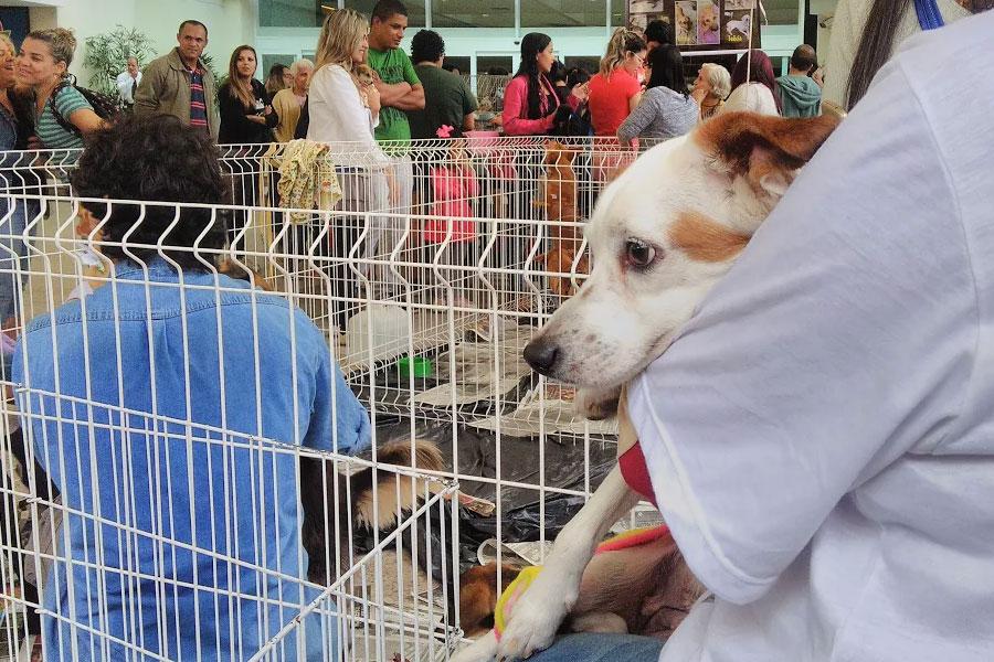 Cachorrinha Pandora na Feira de adoção 'Leve um anjo para casa'.