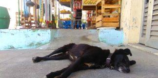 Animais abandonados em São Gonçalo, de quem é a responsabilidade?